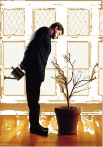 Management proiecte de la Cisa Consulting Srl.