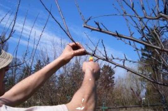Taieri pomi fructiferi, tratamente fitosanitare de la Smart Tree Grup