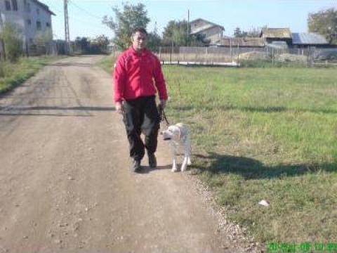 Servicii dresaj de la Dog School
