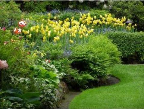 Amenajari gradini si spatii verzi, amenajare gazon de la Special Garden Design Srl