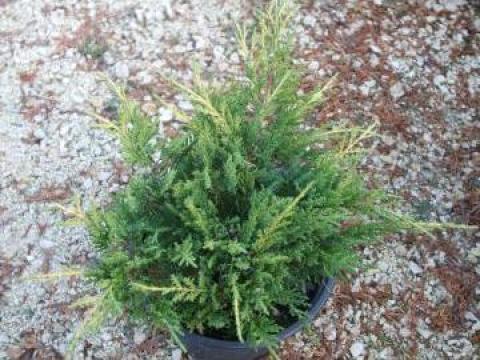 Plante si flori decorative pentru gradina timisoara for Plante decorative