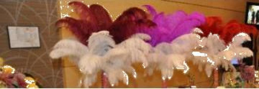 Aranjamente Decorative Pene Strut Sibiu Mpr Events Id 927212