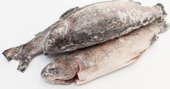 Peste pastrav romanesc eviscerat congelat de la Expert Factor Foods Srl
