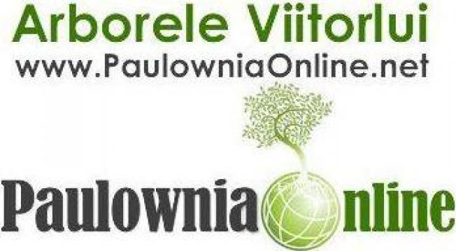 Seminte Paulownia