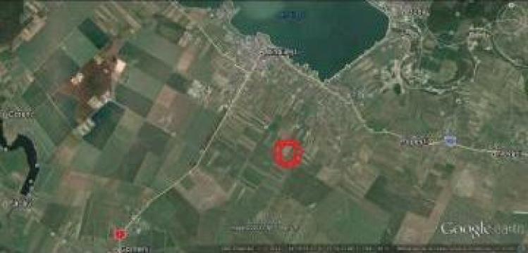 Teren agricol, Mihailesti, Giurgiu, 50 ha de la Gold Imob Grup