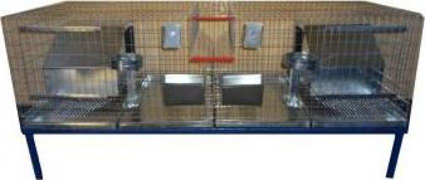 Custi iepuri reproductie 160 cm (rasa medie)