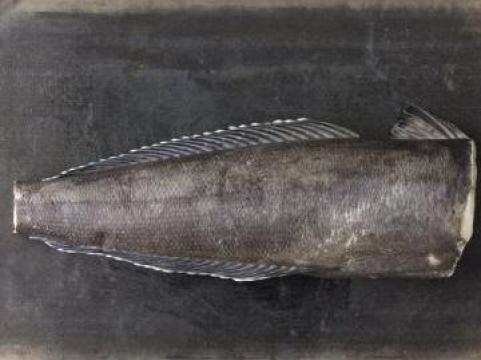 Peste Chilean Sea Bass de la Expert Factor Foods Srl