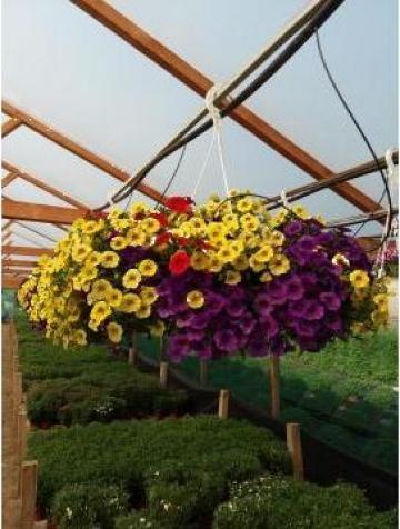 Flori Million Bells, Calibrachoa uni sau amestec de culori de la Sc Fabrica De Flori Natura Srl