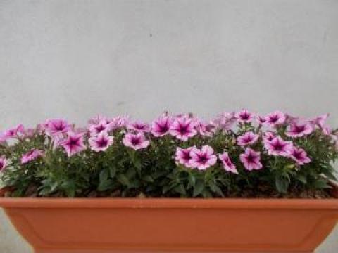 Jardiniere, cupe si piramide de la Sc Fabrica De Flori Natura Srl