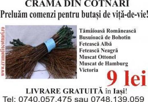 Butasi de vita-de-vie certificati de Uniunea Europeana de la Crama Din Cotnari Srl