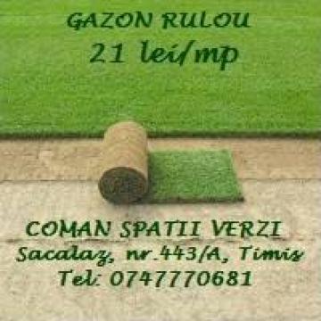 Gazon rulou de la Coman Spatii Verzi Srl