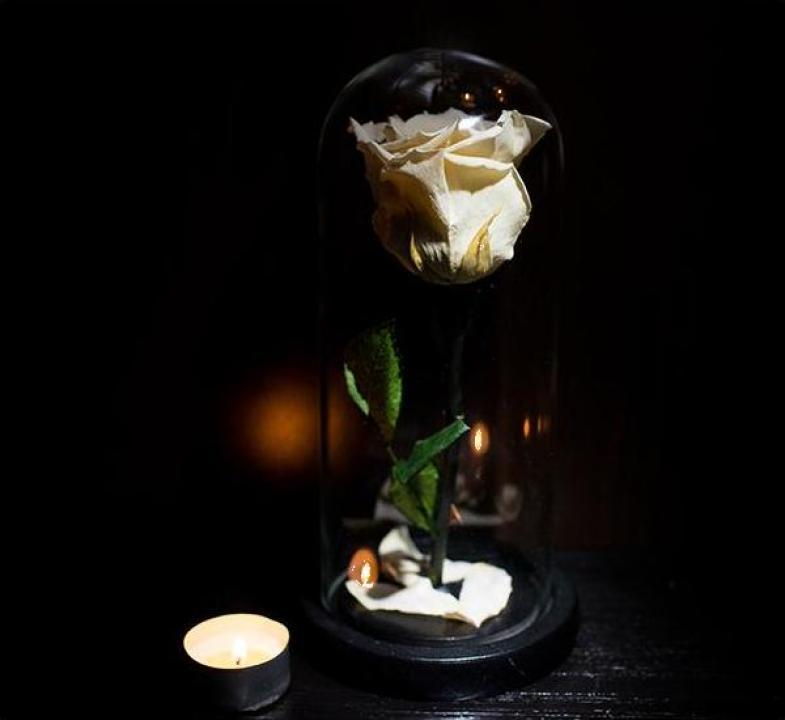 Trandafiri criogenati sub cupola