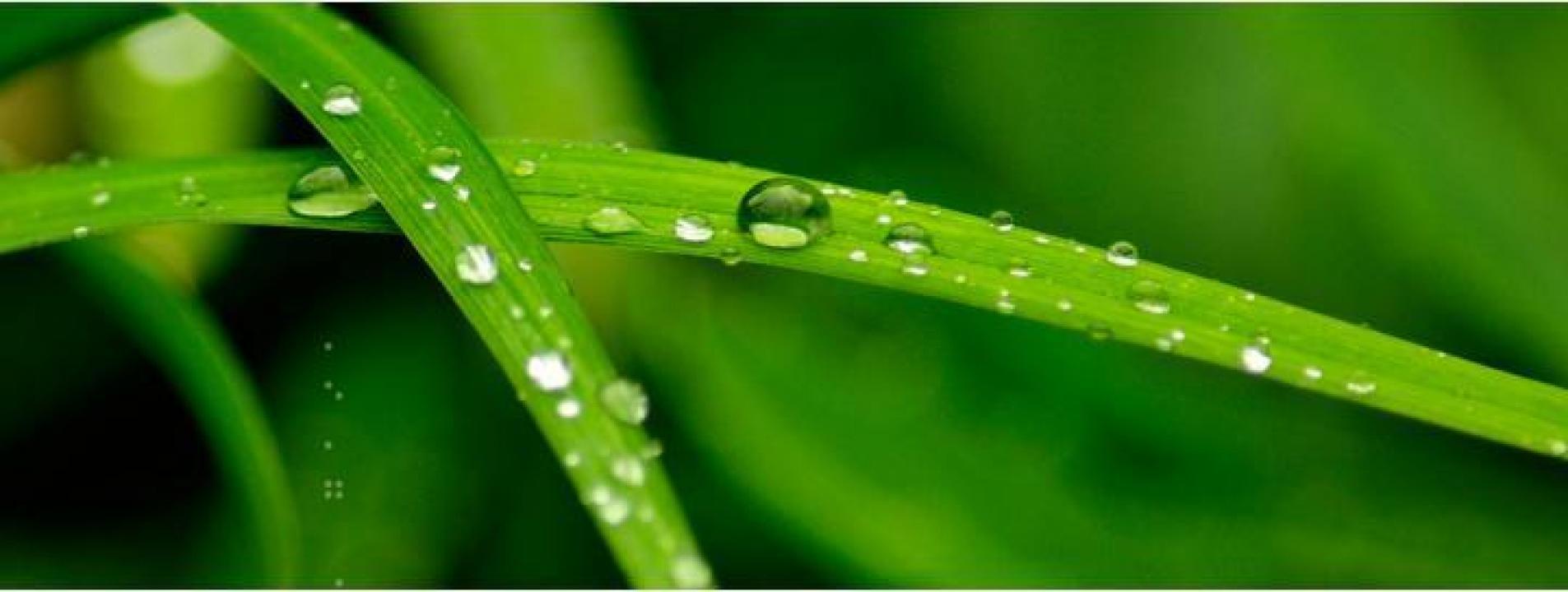 Produse pentru ecologizare